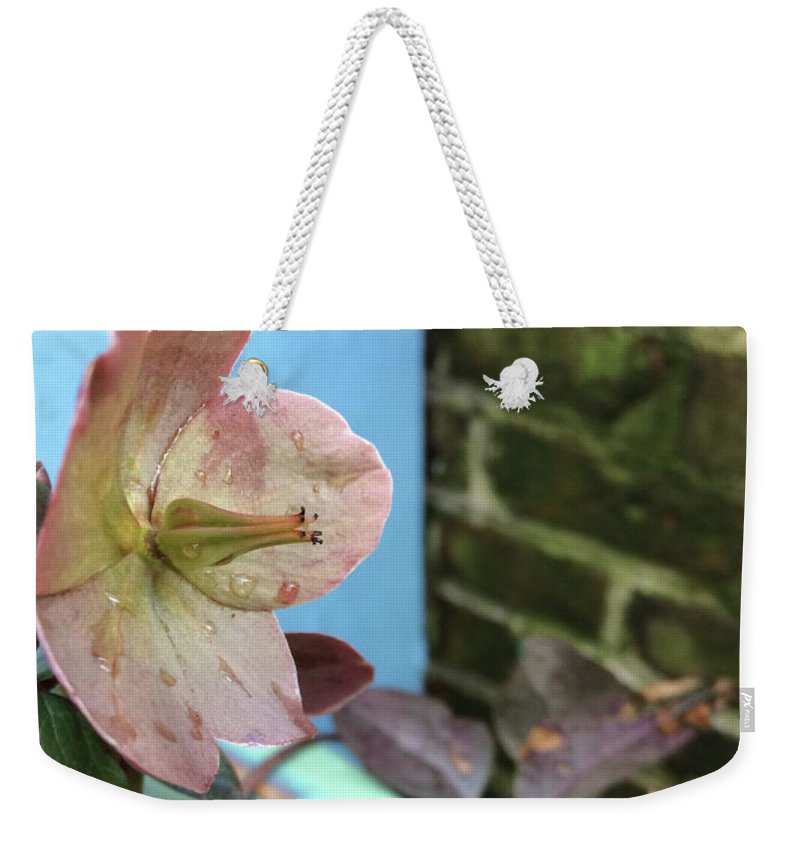 Hellebore Weekender Tote Bag featuring the photograph Lenten Rose After An April Shower by Clay Cofer