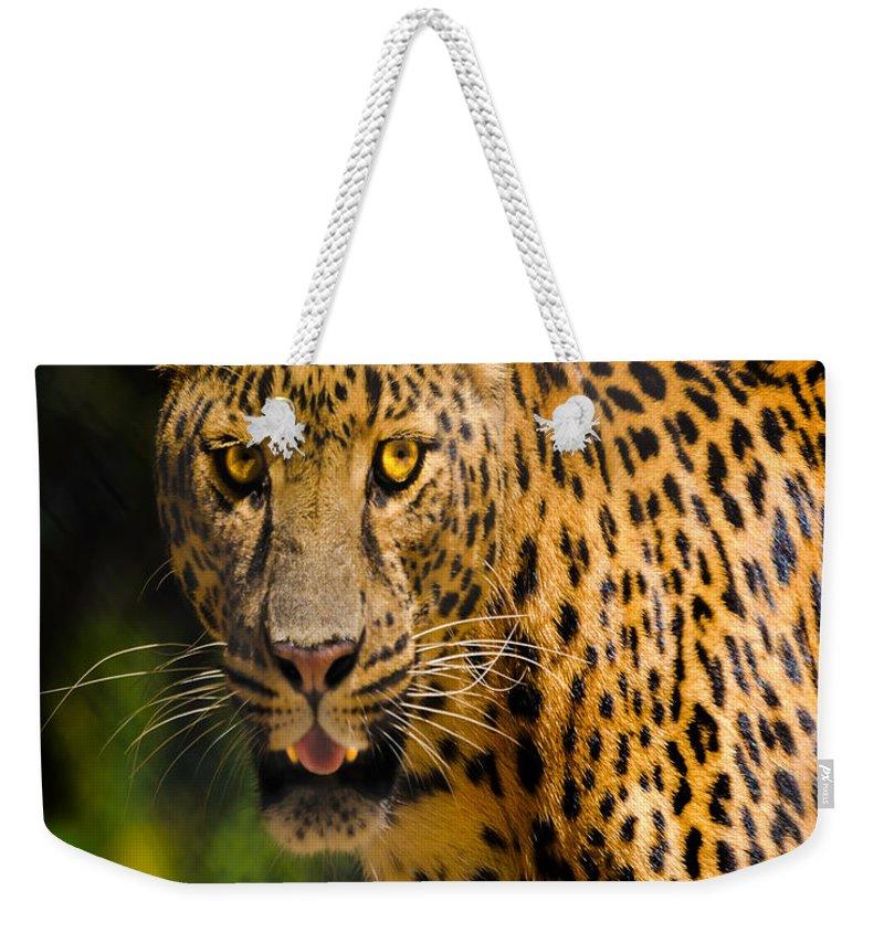 Nature Wear Weekender Tote Bag featuring the photograph Leopard Nature Girl by LeeAnn McLaneGoetz McLaneGoetzStudioLLCcom