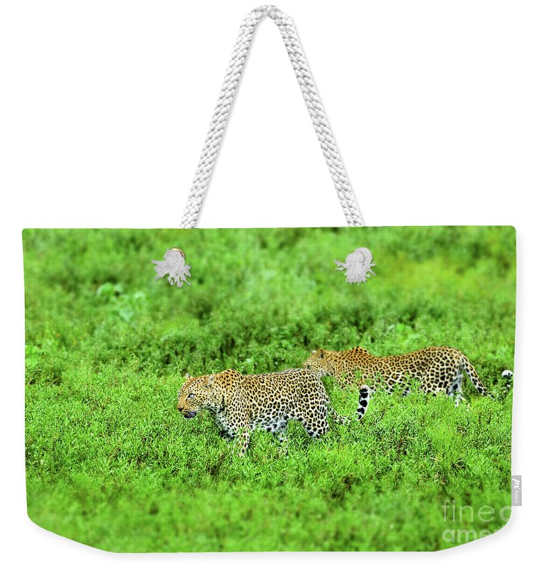 Africa Weekender Tote Bag featuring the photograph Leopard On The Move by Etienne Outram