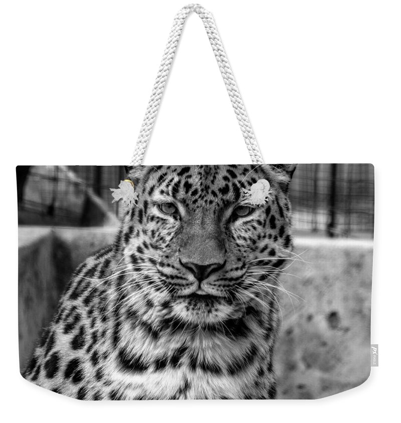 Big Cat Weekender Tote Bag featuring the photograph Leopard by Robert Edgar