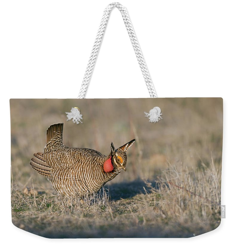 Lesser Weekender Tote Bag featuring the photograph Lesser Prairie Chicken by Gary Langley