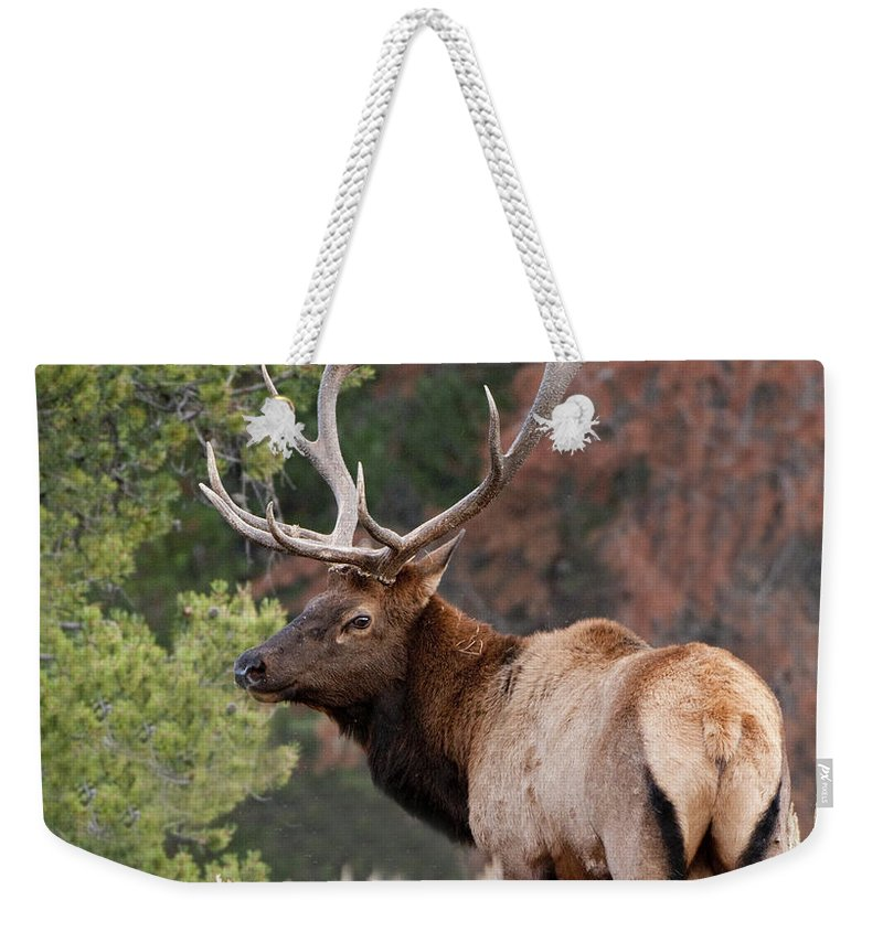 Grand Teton Weekender Tote Bag featuring the photograph Let The Rut Begin by Sandra Bronstein