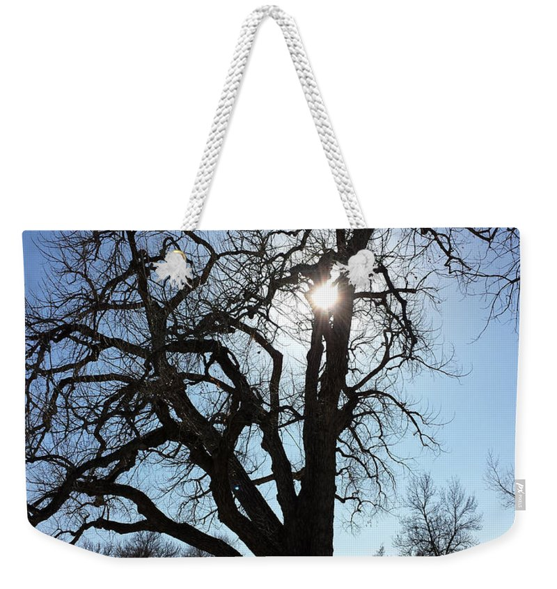 Tree Weekender Tote Bag featuring the photograph Let The Sun Shine Through by Lorraine Baum