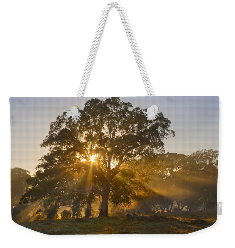 Tree Weekender Tote Bag featuring the photograph Let There Be Light by Mike Dawson