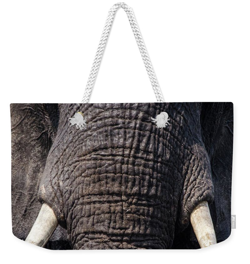 Elephant Weekender Tote Bag featuring the photograph Let's Go For A Swim by Yvette Van Teeffelen