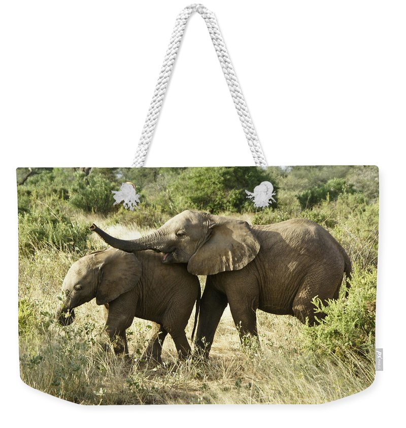 Africa Weekender Tote Bag featuring the photograph Let's Play by Michele Burgess