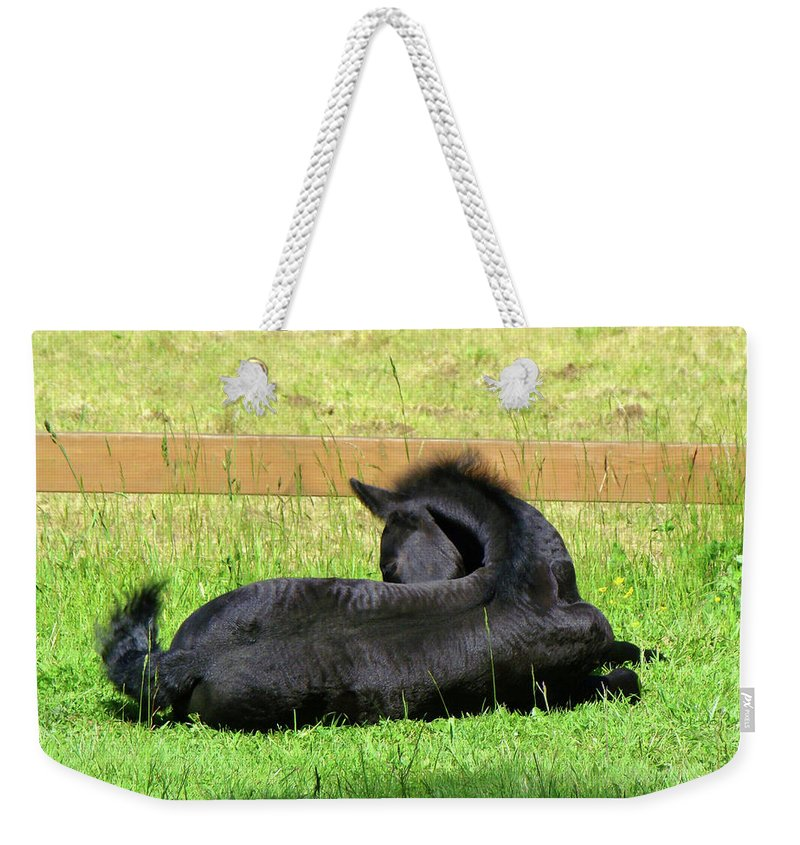 Baby Friesian Laying Down Weekender Tote Bag featuring the photograph Liam in the sun by Lisa Rose Musselwhite