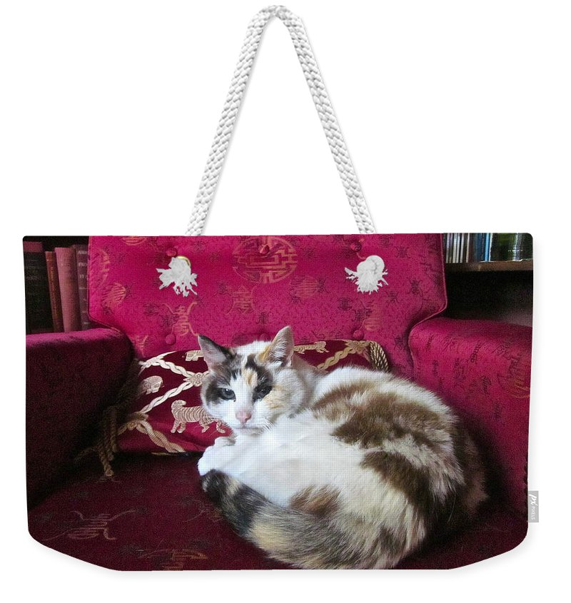 Photograph Of Cat Weekender Tote Bag featuring the photograph Librarian by Gwyn Newcombe
