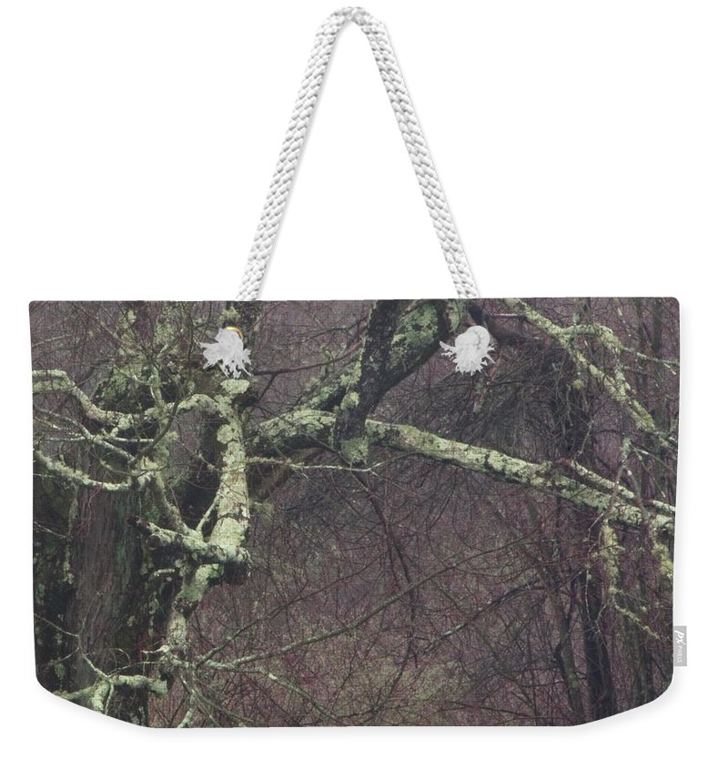 Photography Weekender Tote Bag featuring the photograph Lichen by Steven Natanson