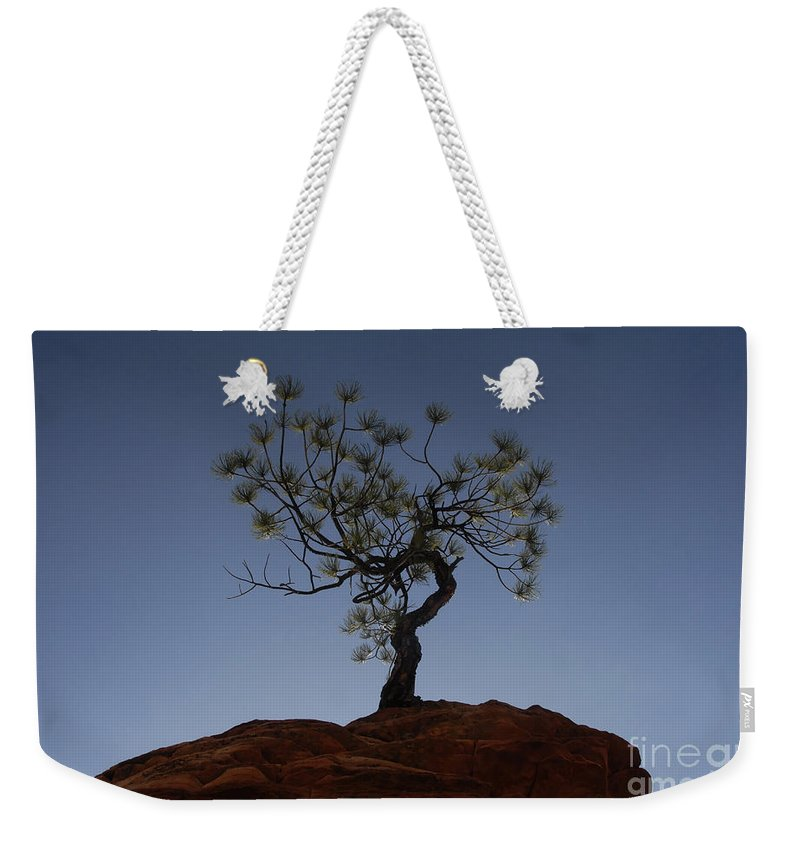 Tree Weekender Tote Bag featuring the photograph Life Force by David Lee Thompson