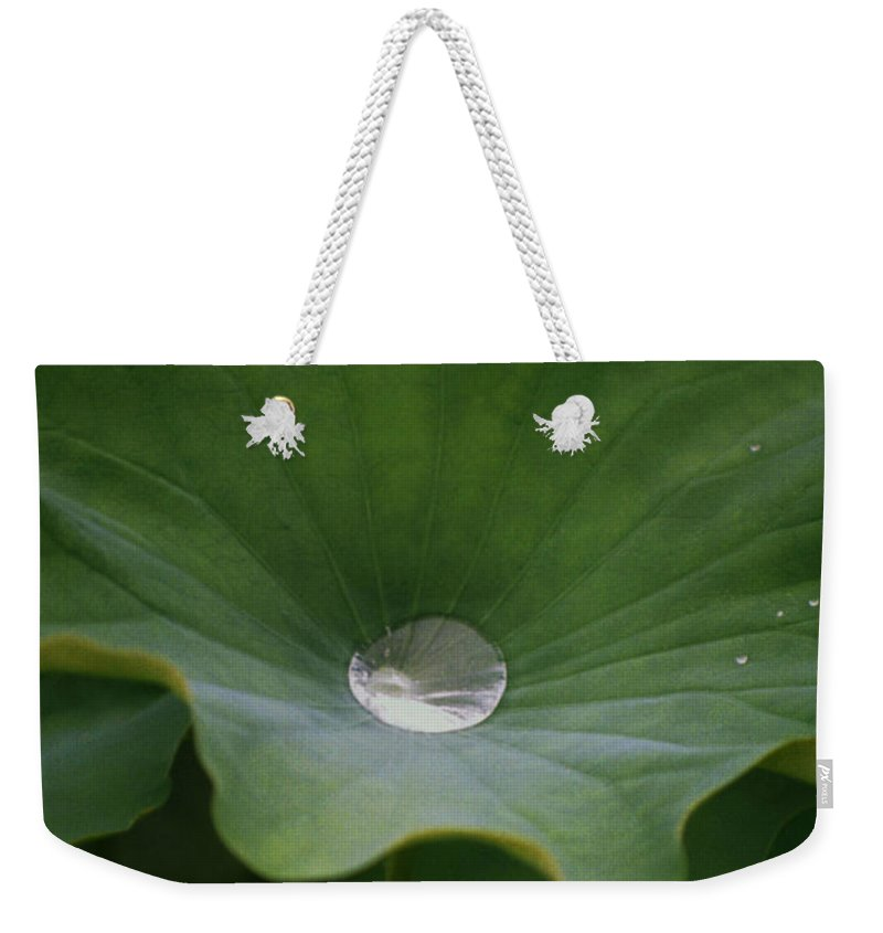 Plant Weekender Tote Bag featuring the photograph Life by Richard Rizzo