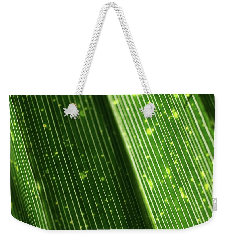 Close-up Photo Photography Flower Plant Palm Frond Green Backlit Weekender Tote Bag featuring the photograph Light Shining Through Palm Frond by Christina Geiger