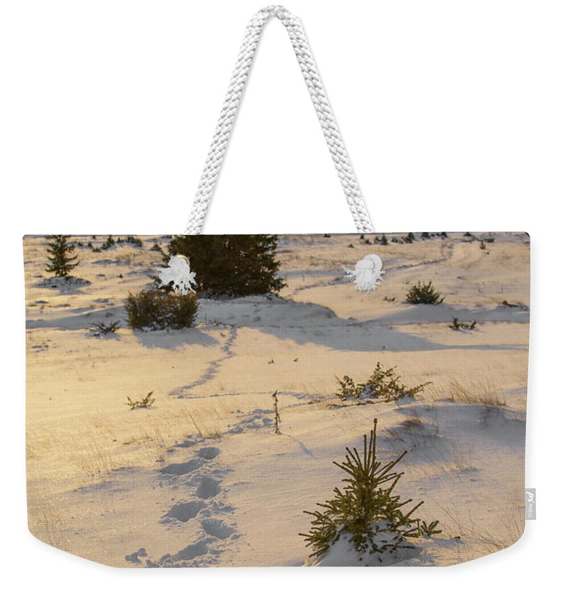 Landscapes Weekender Tote Bag featuring the photograph Lighted Path by Daniel Balakov