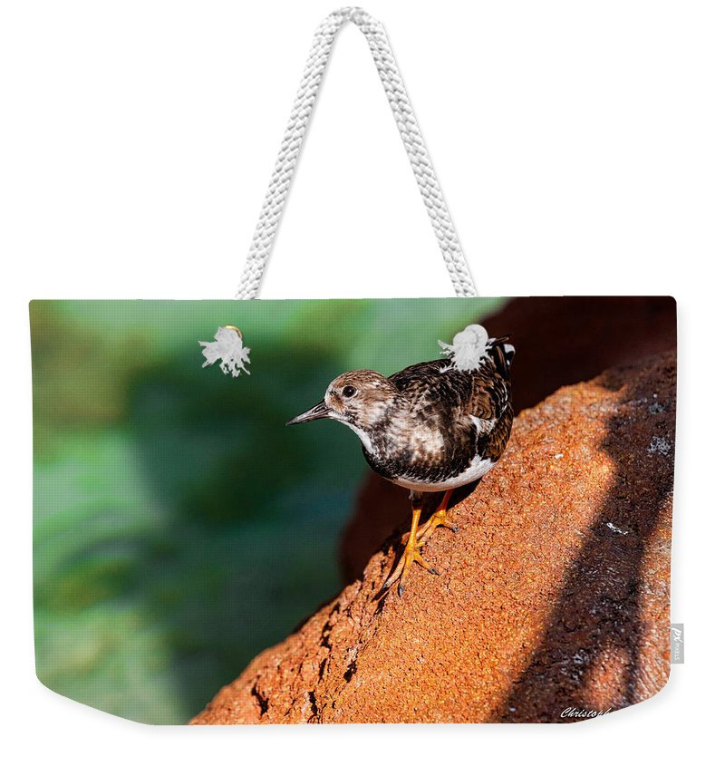 Nassau Weekender Tote Bag featuring the photograph Lil Bird by Christopher Holmes