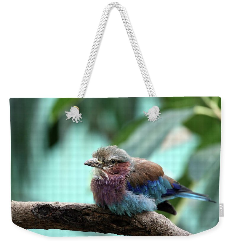 Bird Weekender Tote Bag featuring the photograph Lilac Breasted Roller by Karol Livote