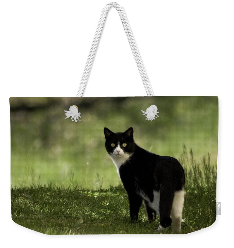Cat Weekender Tote Bag featuring the photograph Lilly by Trish Tritz