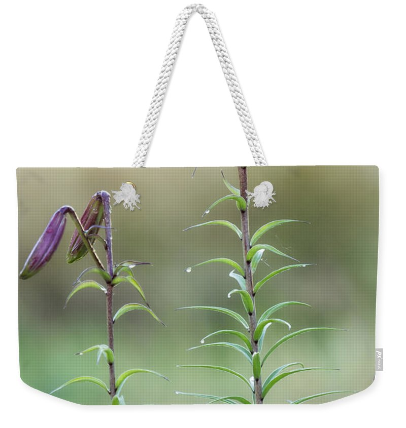 Lily Buds Weekender Tote Bag featuring the photograph Lily Buds by Belinda Greb