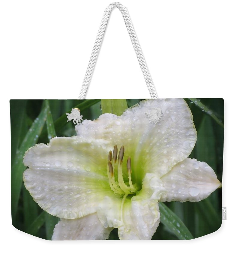 Lime Frost Daylily Weekender Tote Bag featuring the photograph Lime Frost - Daylily by MTBobbins Photography