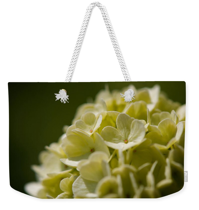 Hydrangea Weekender Tote Bag featuring the photograph Lime Hydrangea by Lisa Knechtel
