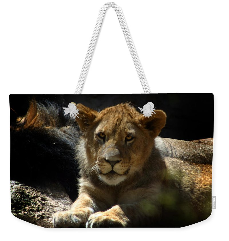 Lions Weekender Tote Bag featuring the photograph Lion Cub by Anthony Jones