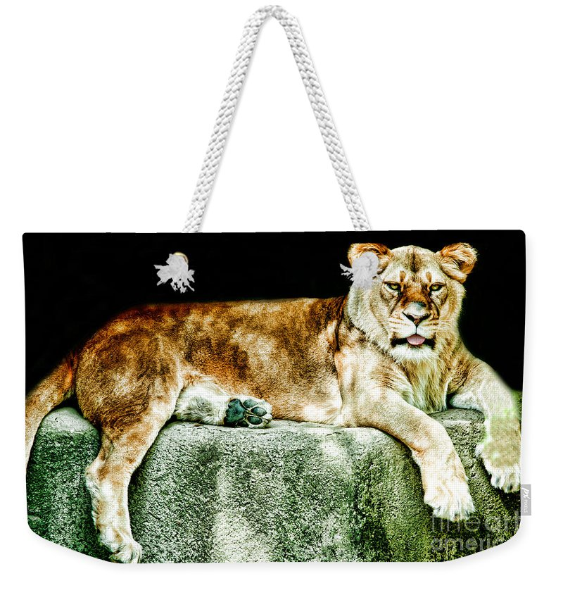Resting Weekender Tote Bag featuring the photograph Lion by Gaby Swanson
