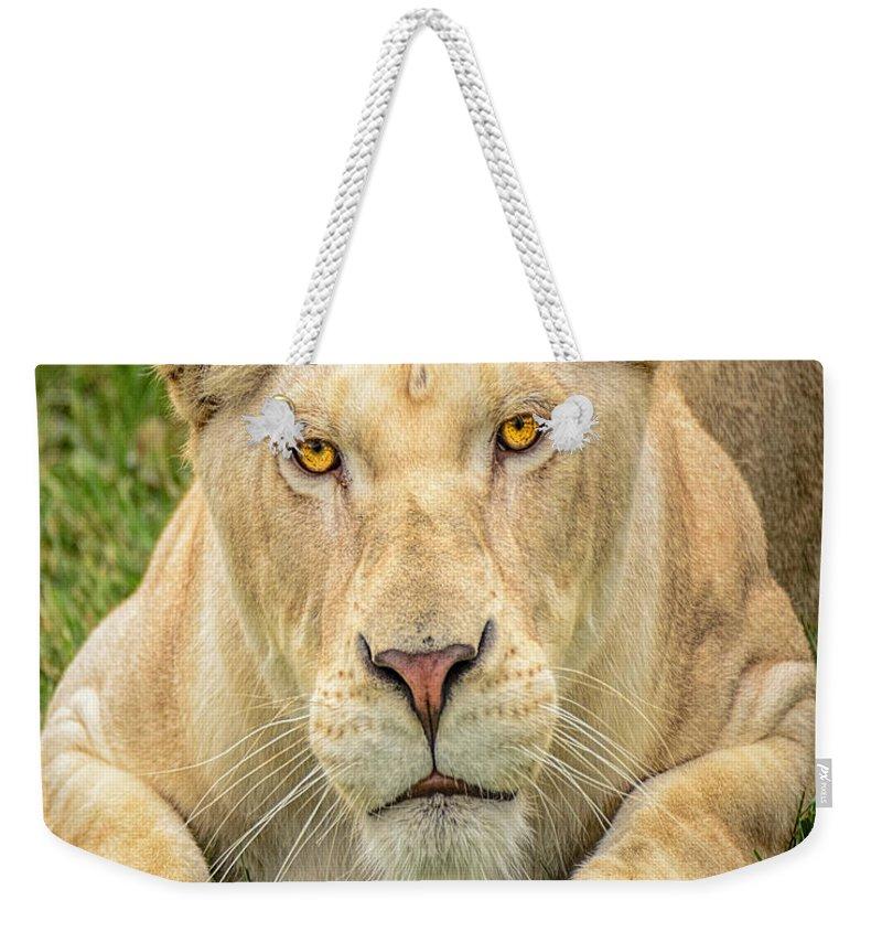Nature Wear Weekender Tote Bag featuring the photograph Lion Nature Wear by LeeAnn McLaneGoetz McLaneGoetzStudioLLCcom