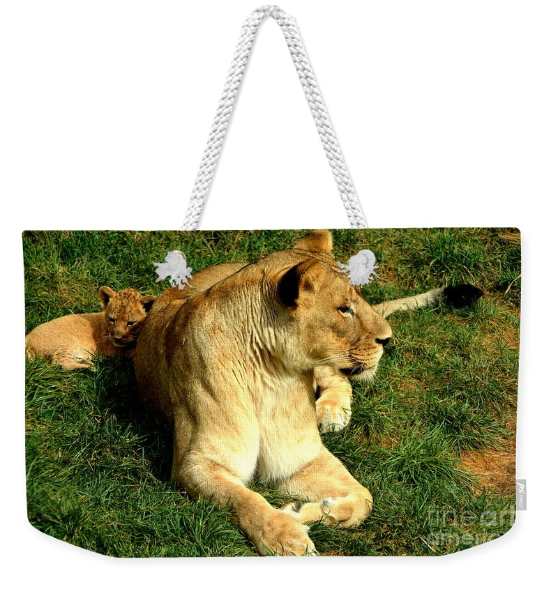 Lioness And Cub Weekender Tote Bag featuring the photograph Lioness And Cub by Stephen Path