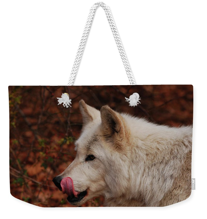 Wolf Weekender Tote Bag featuring the photograph Lip Smacking Good by Lori Tambakis