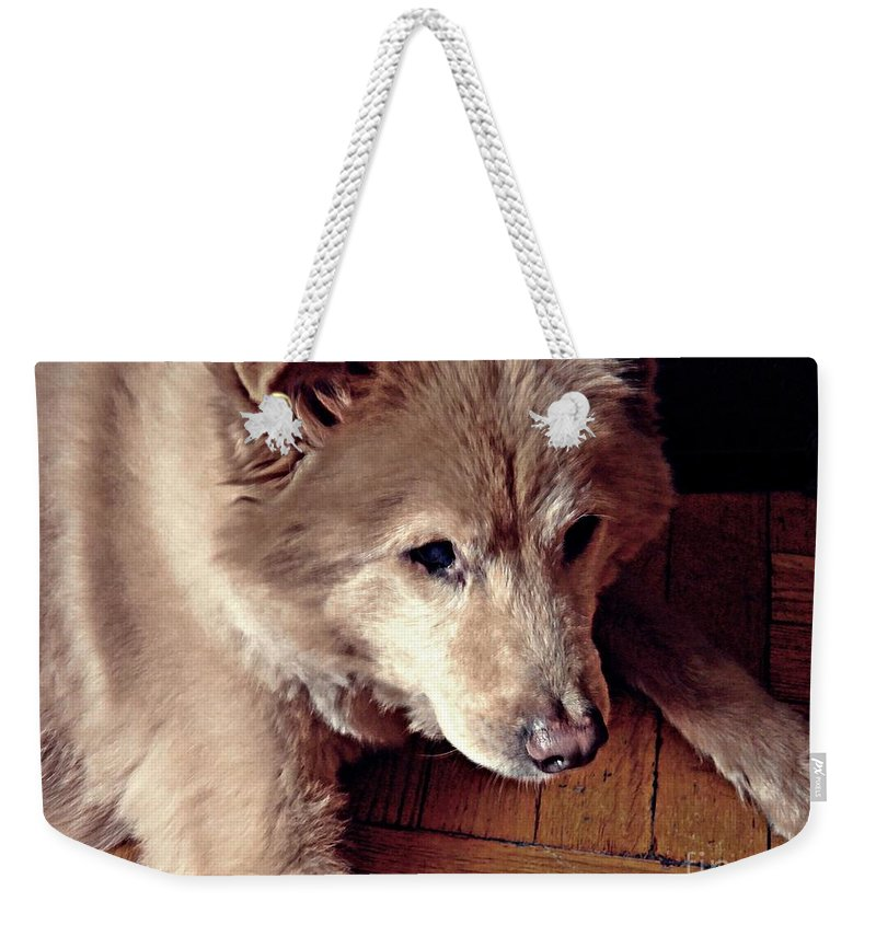 Dog Weekender Tote Bag featuring the photograph Little Bear In Old Age by Sarah Loft