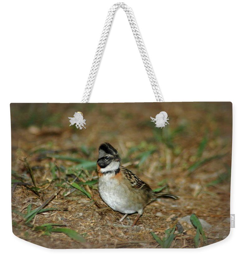 Bird Weekender Tote Bag featuring the photograph Little Bird In Ecuador by Teresa Stallings