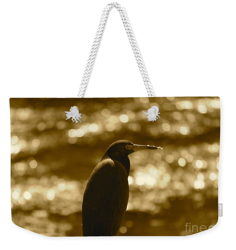 Heron Weekender Tote Bag featuring the photograph Little Blue Heron In Golden Light by Carol Groenen
