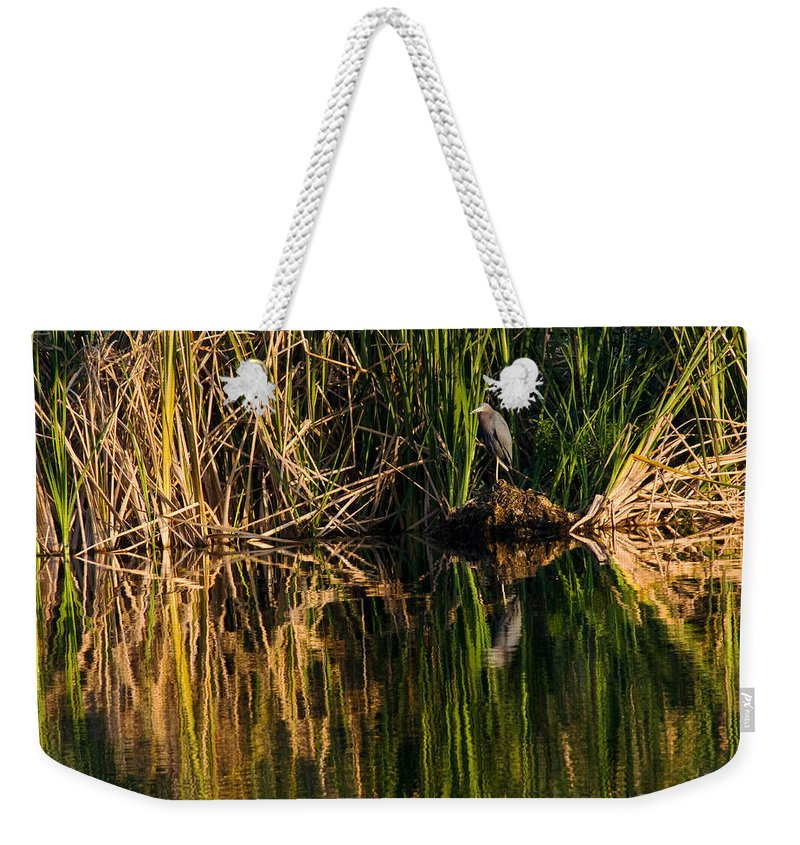 Heron Weekender Tote Bag featuring the photograph Little Blue Heron by Steven Sparks