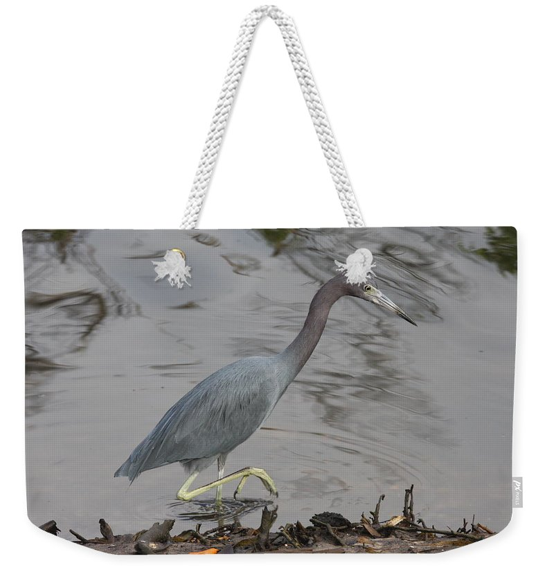 Heron Weekender Tote Bag featuring the photograph Little Blue Heron Walking by Christiane Schulze Art And Photography