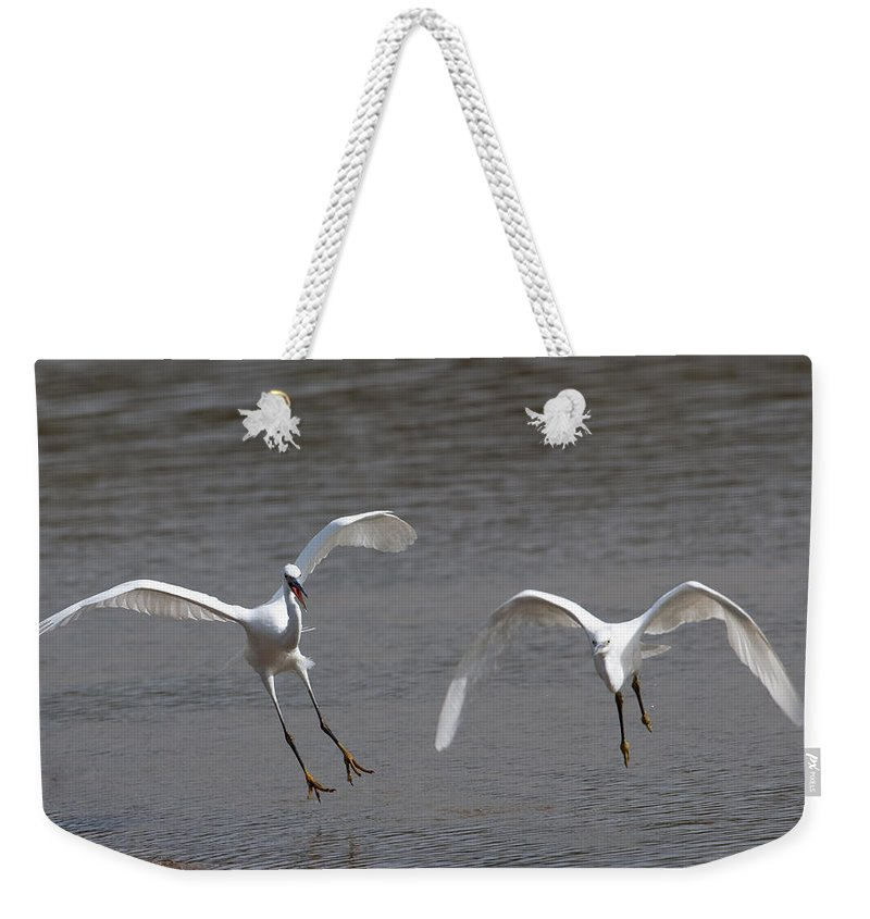 Egret Weekender Tote Bag featuring the photograph Little Egrets In Flight by Bob Kemp