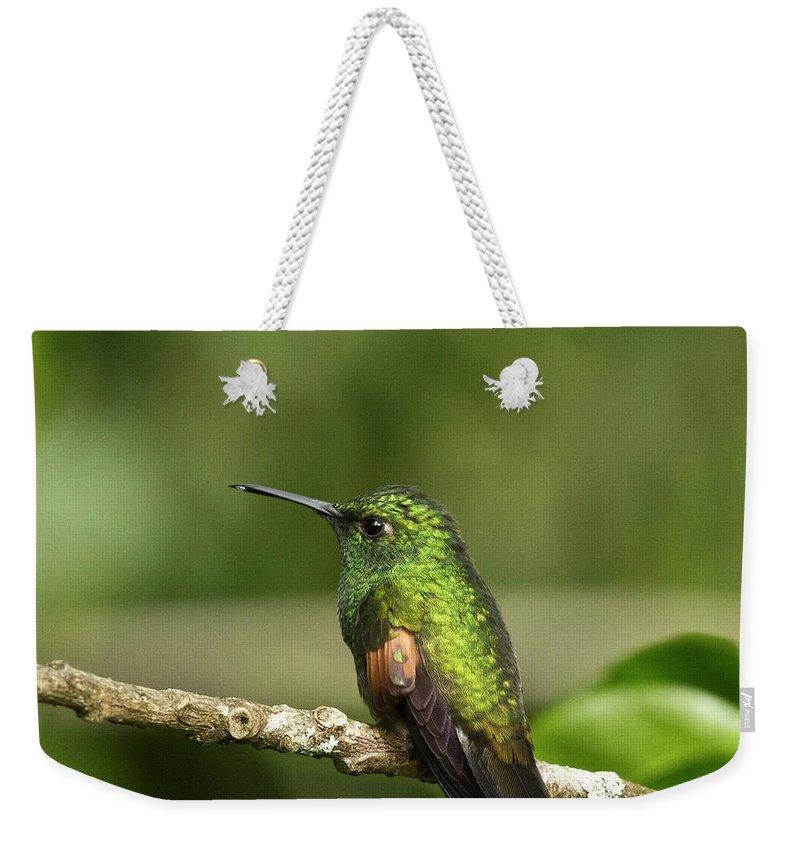 Hummingbird Weekender Tote Bag featuring the photograph Little Hummingbird by Heiko Koehrer-Wagner