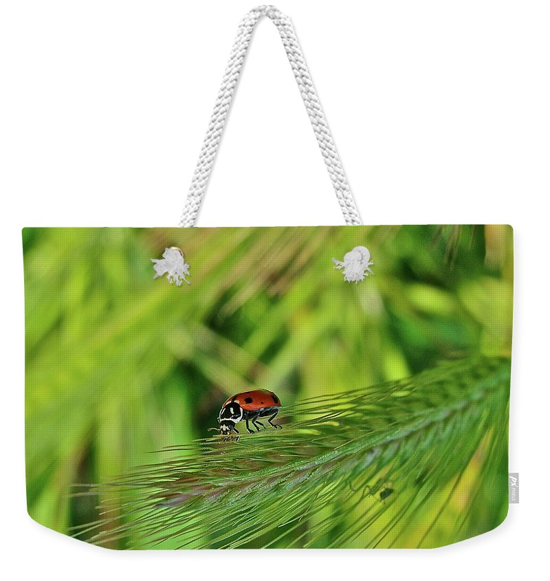 Ladybug Weekender Tote Bag featuring the photograph Little Lady by Diana Hatcher