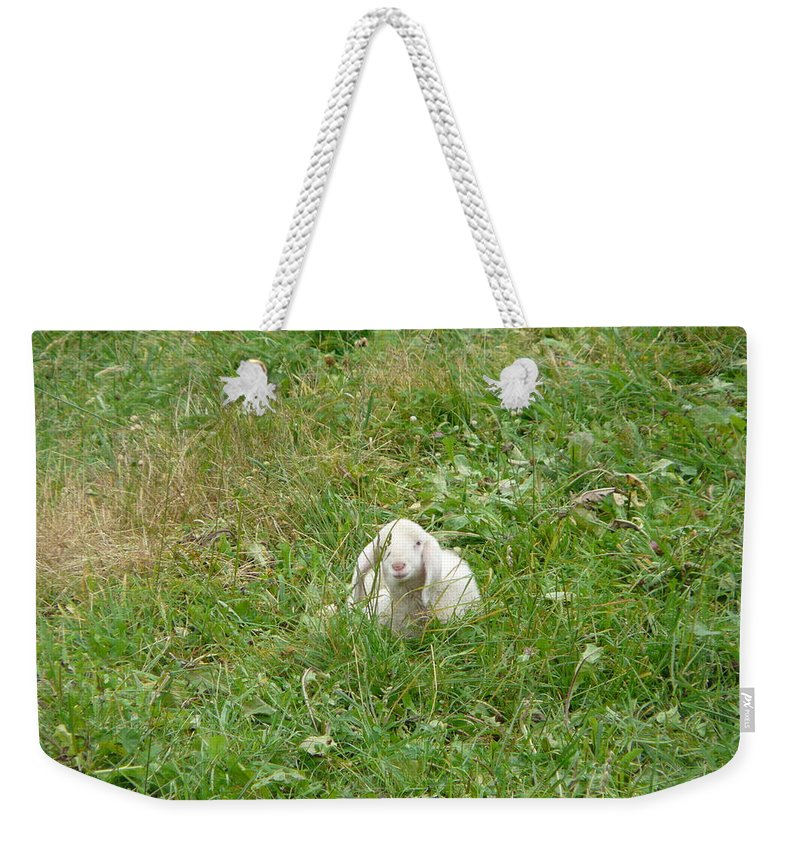 Lamb Weekender Tote Bag featuring the photograph Little Lamb by Valerie Ornstein