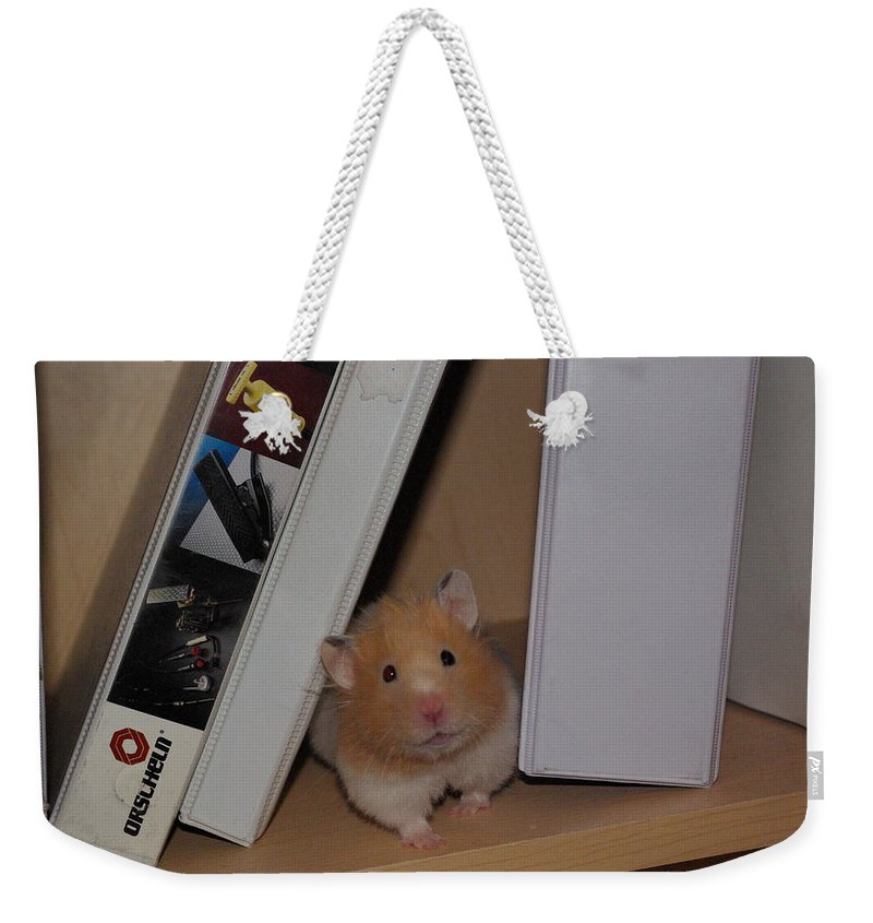 Hamster Weekender Tote Bag featuring the photograph Little Missy Is Watching by Cindy Johnston