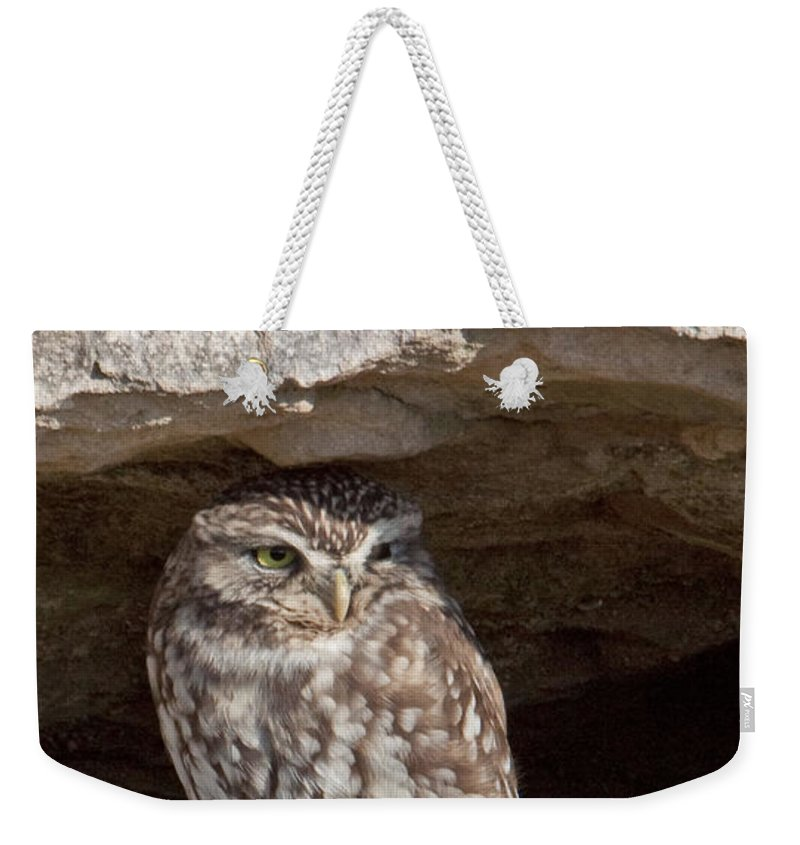 Little Owl Weekender Tote Bag featuring the photograph Little Owl by Bob Kemp