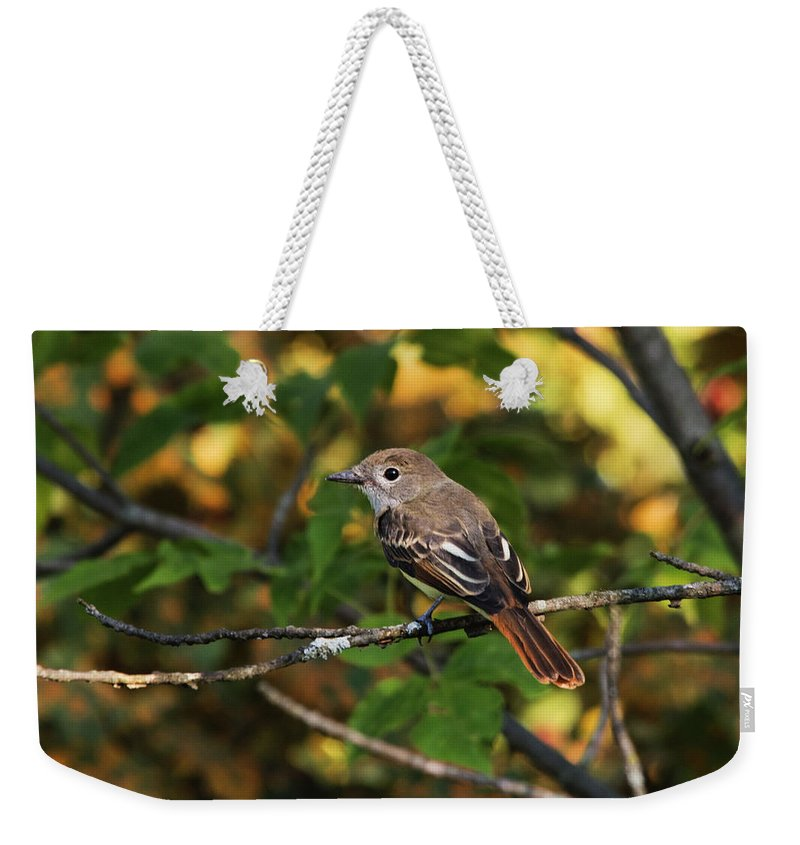 Bird Weekender Tote Bag featuring the photograph Little Tweet by Jayne Gohr