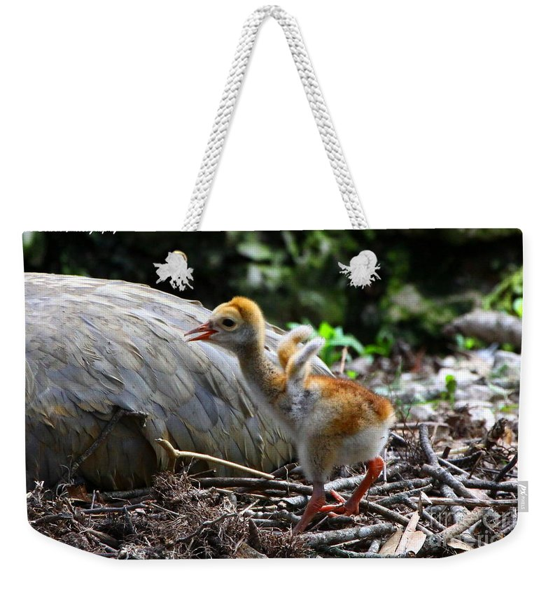 Sandhill Crane Weekender Tote Bag featuring the photograph Little Wings by Barbara Bowen
