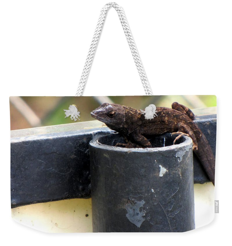 Lizard Weekender Tote Bag featuring the photograph Lizard by Sarah Houser