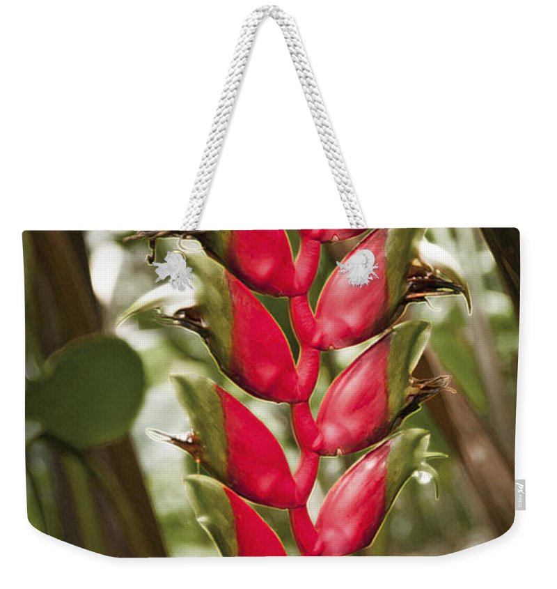 Heliconia Rostrata Weekender Tote Bag featuring the photograph Lobster Claw by Steven Sparks
