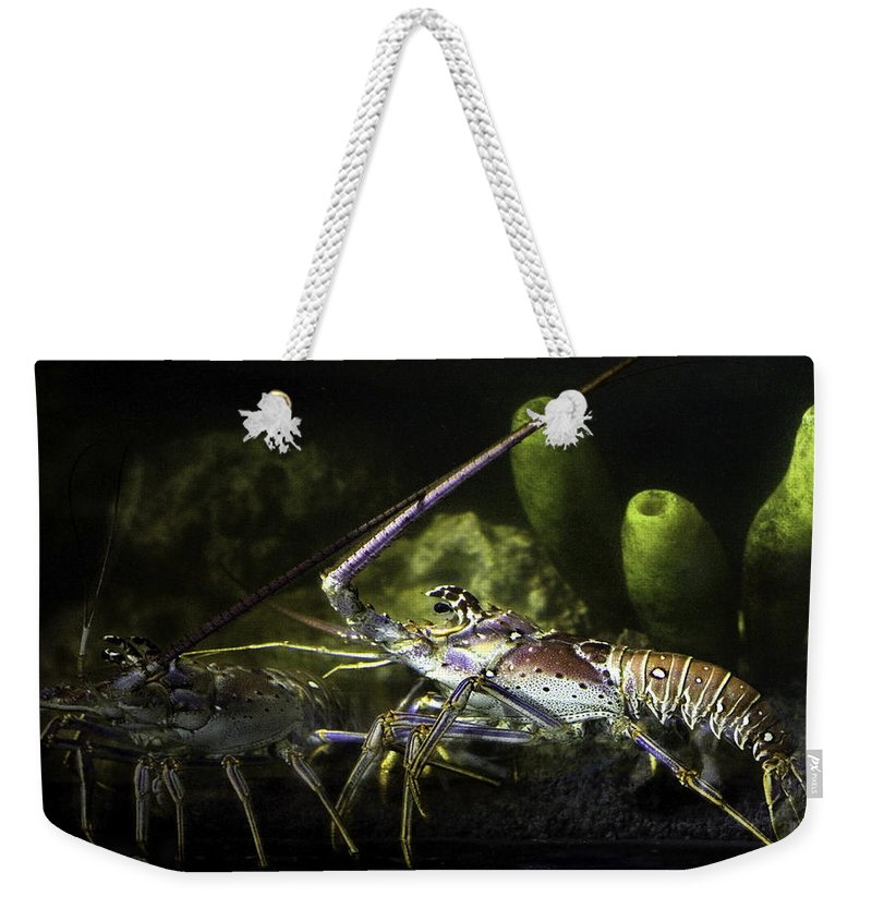 Lobster Weekender Tote Bag featuring the photograph Lobster In Love by Marilyn Hunt