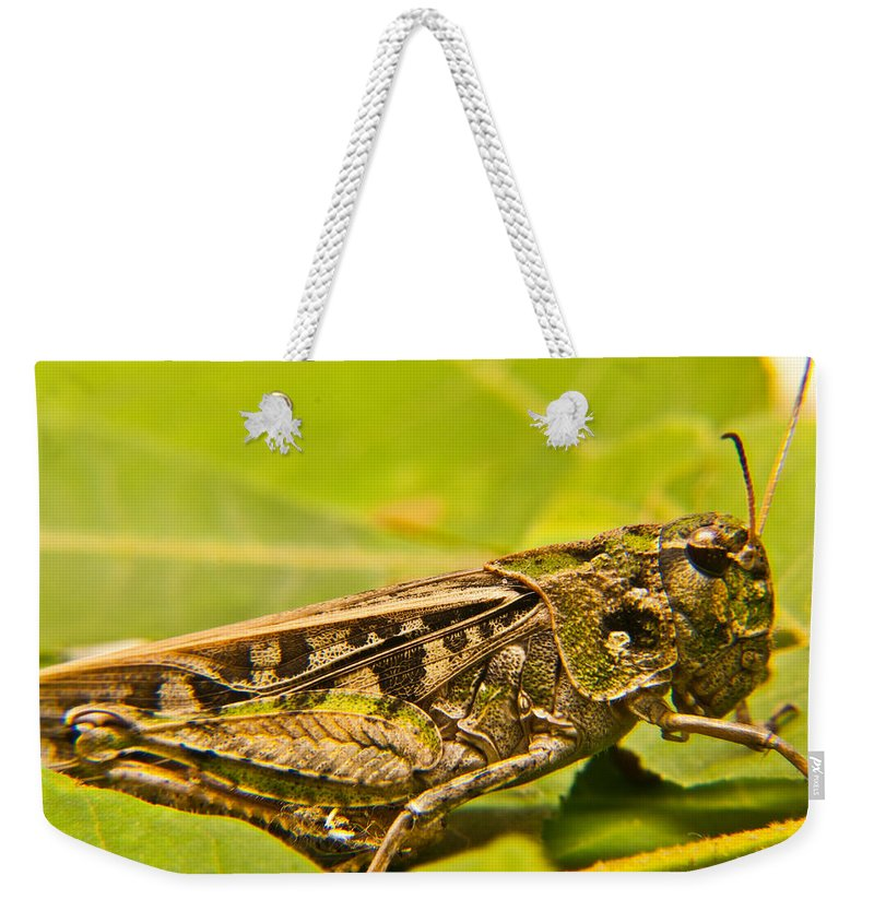 Locust Weekender Tote Bag featuring the photograph Locust In Green by Douglas Barnett