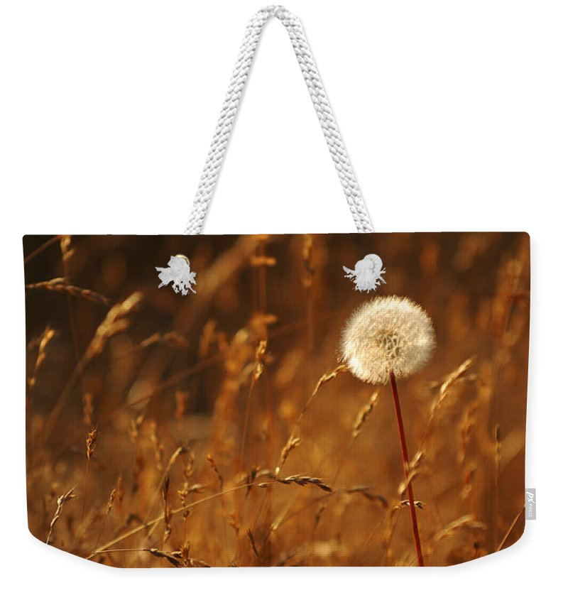 Nature Outdoors Field Dandelion Alone Single Sole Botanical Weekender Tote Bag featuring the photograph Lone Dandelion by Jill Reger
