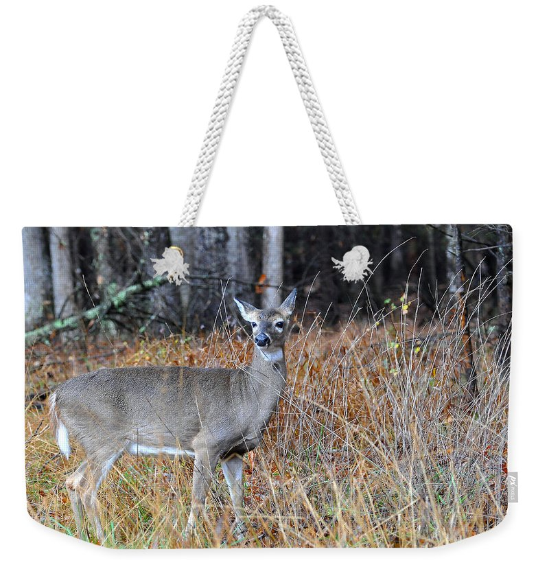 Doe Weekender Tote Bag featuring the photograph Lone Doe by Todd Hostetter