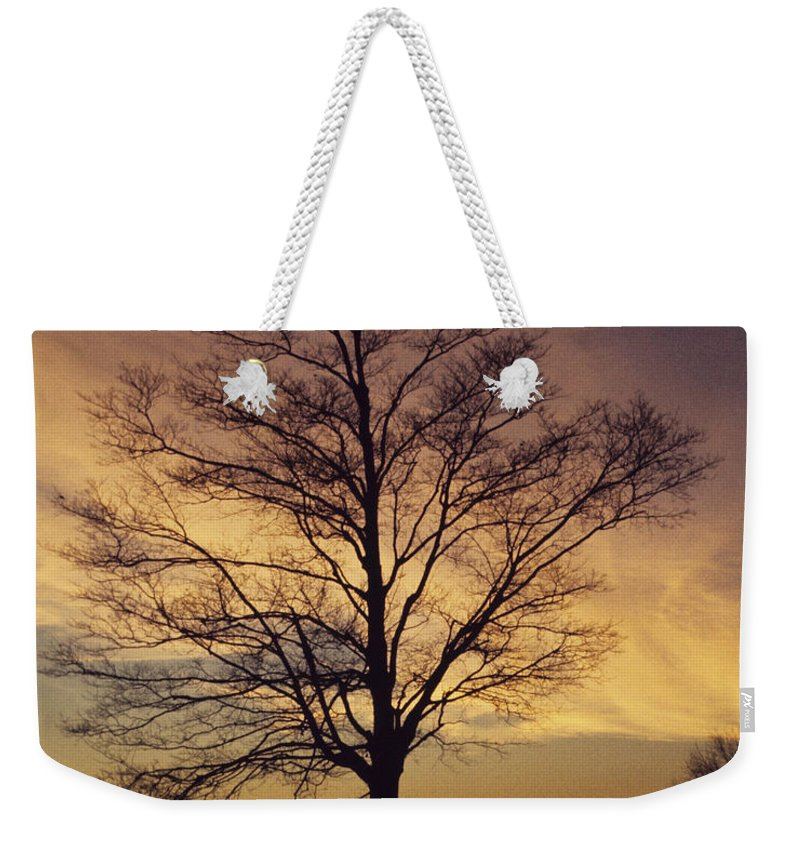 Lone Tree Weekender Tote Bag featuring the photograph Lone Tree At Sunrise by John Harmon