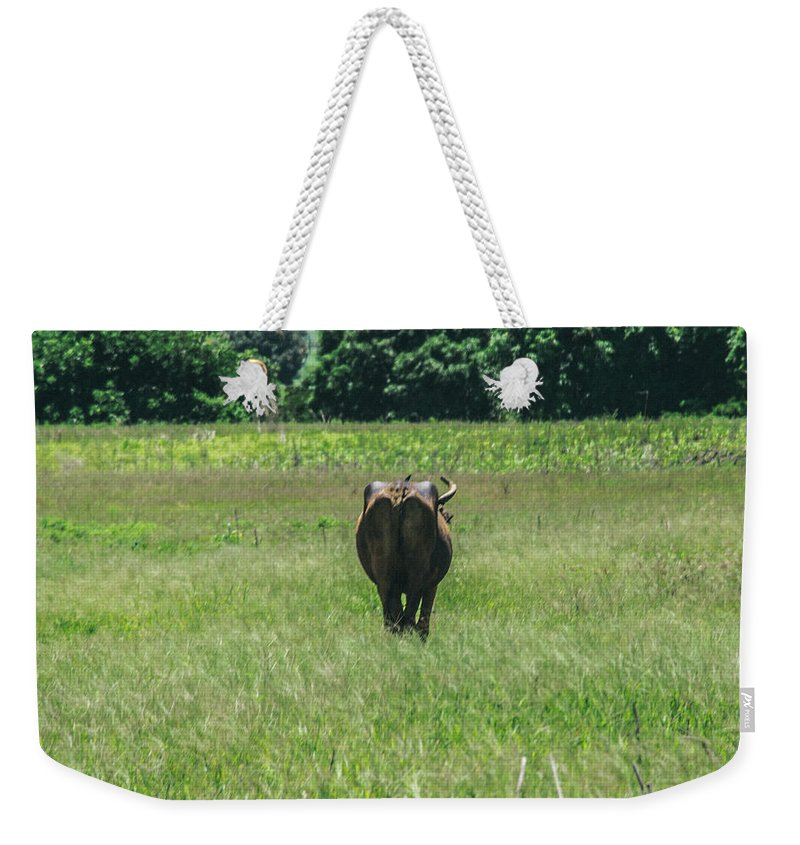 Cows Weekender Tote Bag featuring the photograph Lonely Cow 2 by Totto Ponce