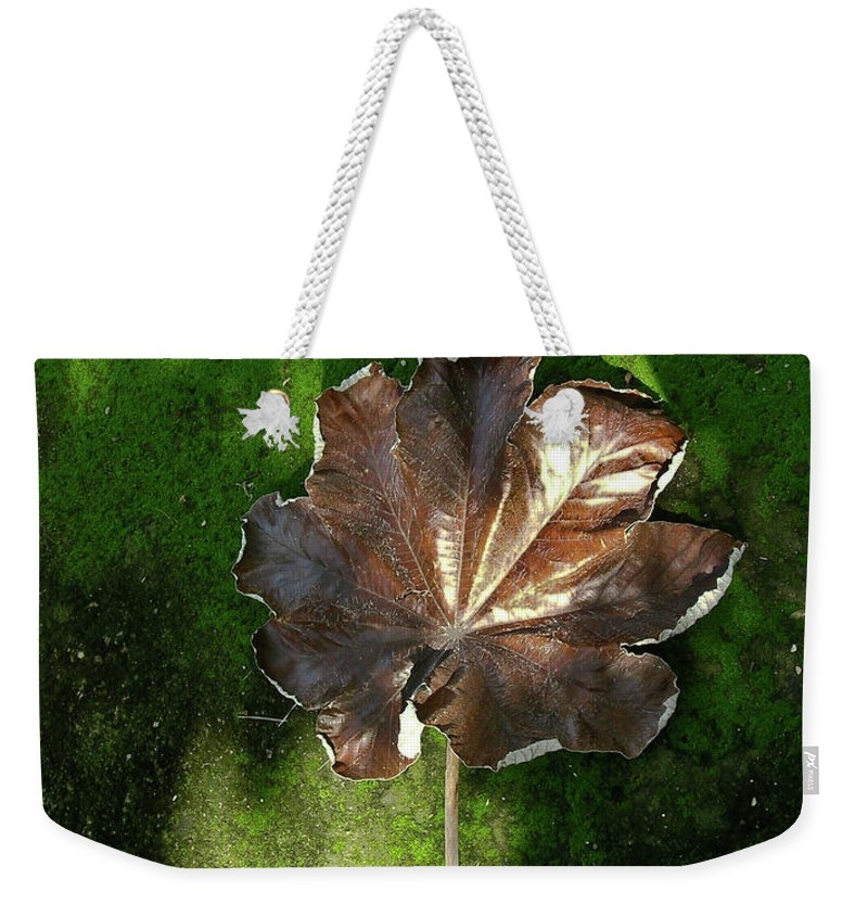 Lonely Weekender Tote Bag featuring the photograph Lonely Leaf On Moss by Douglas Barnett
